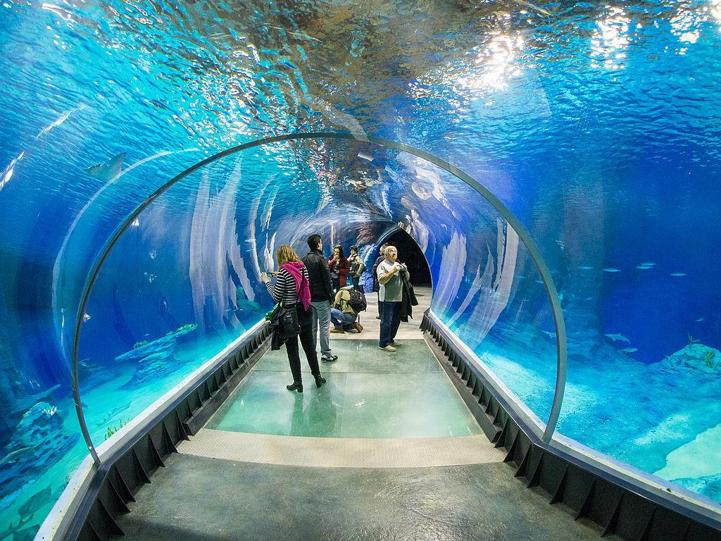 Podwodny tunel w Afrykarium - Autor: Lower Silesia Źródło: commons.wikimedia.org