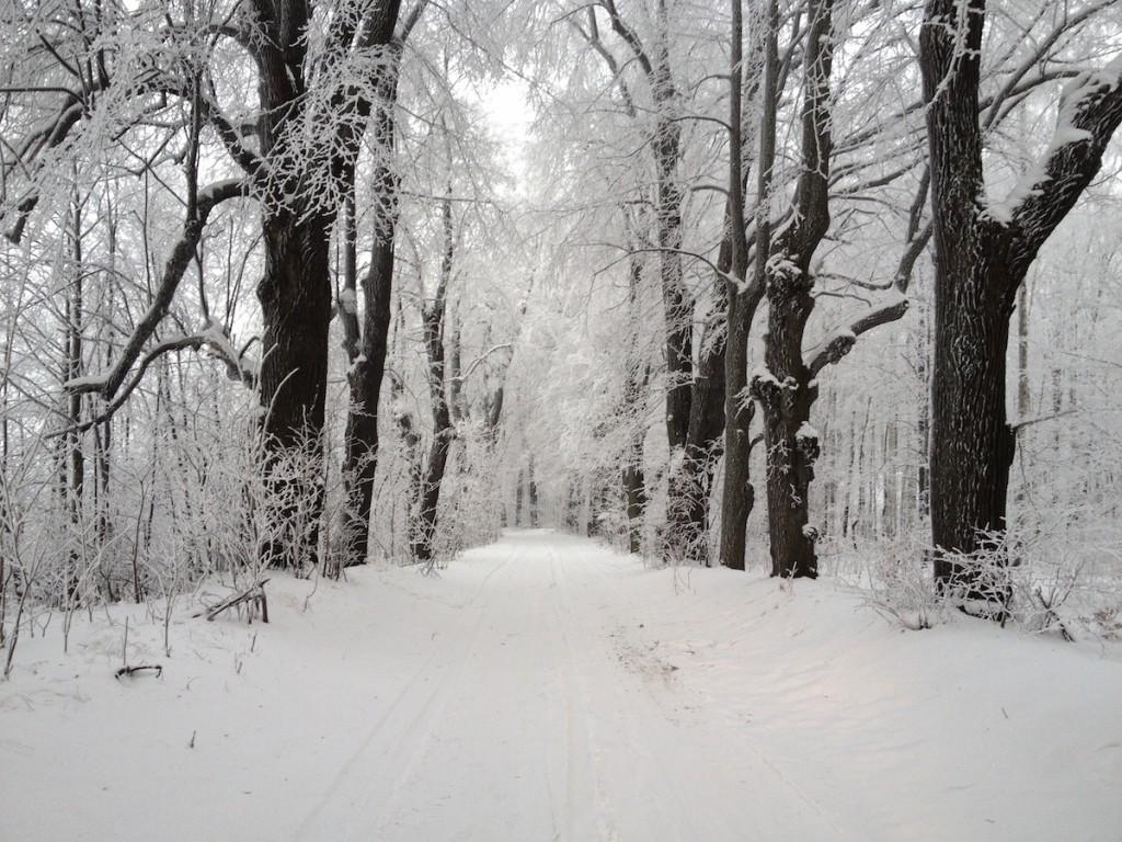 Zima w Parku Książańskim - Fotografie Wykonane iPhonem 4s