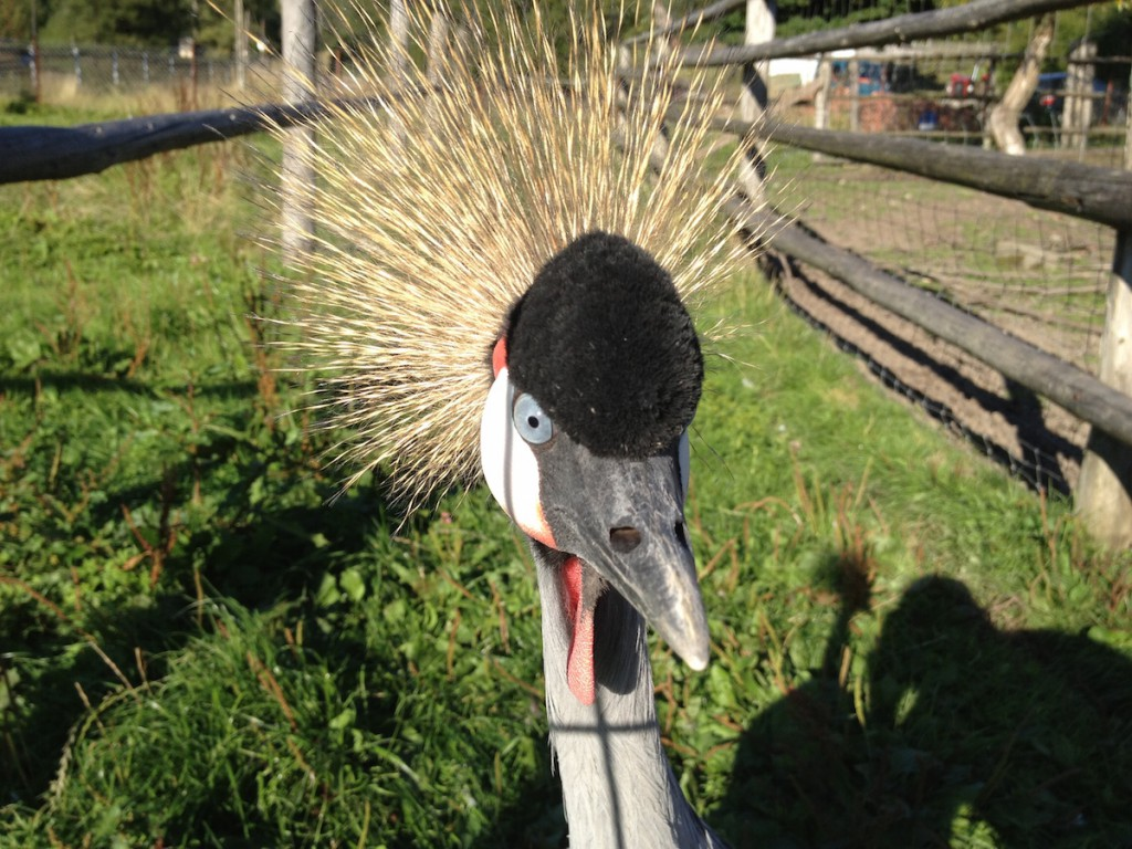 Pan Ptak w ZOO - Fotografie Wykonane iPhonem 4s