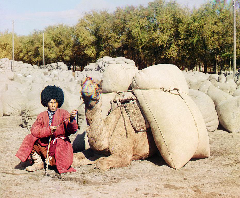 Turkmeński poganiacz wielbłądów.