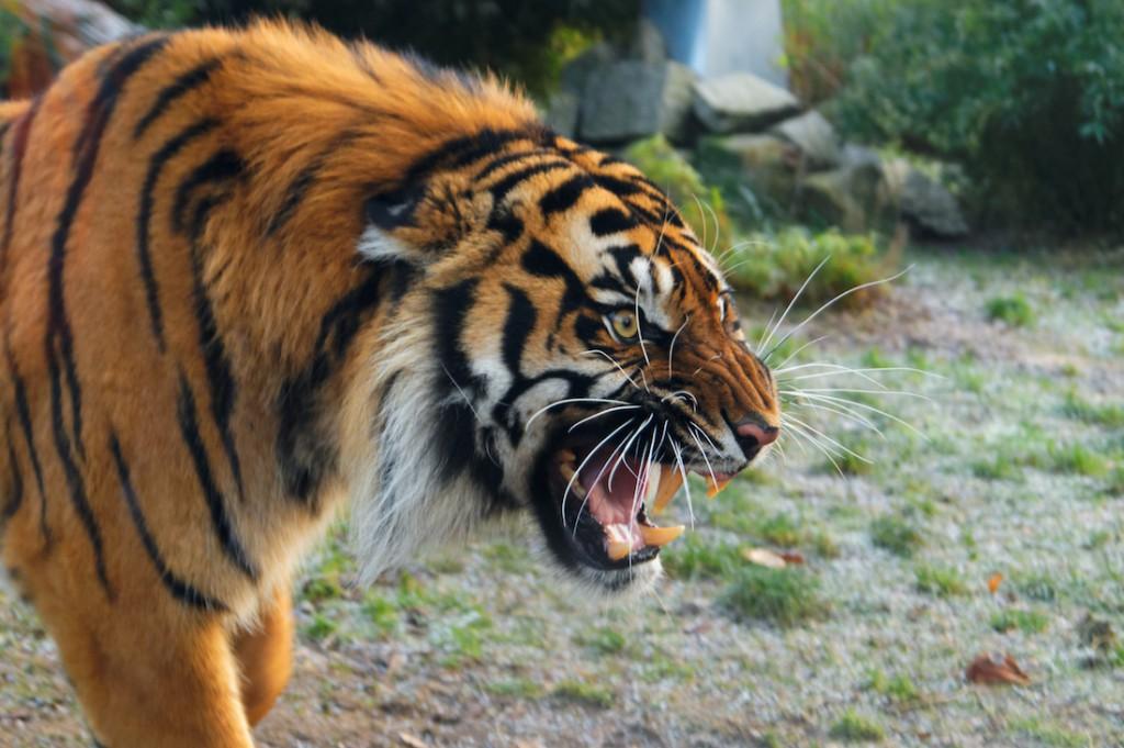 Zoo i Afrykarium we Wrocławiu - Atrakcje Turystyczne Dolny Śląsk
