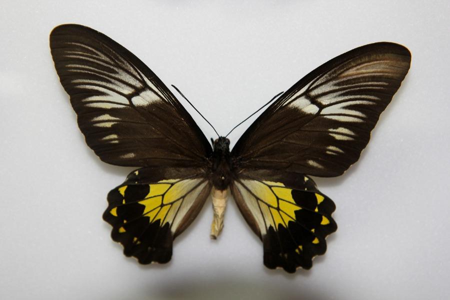 Muzeum Motyli we Władysławowie - Atrakcje Turystyczne Pomorze - Foto: Tomasz Kapczyński