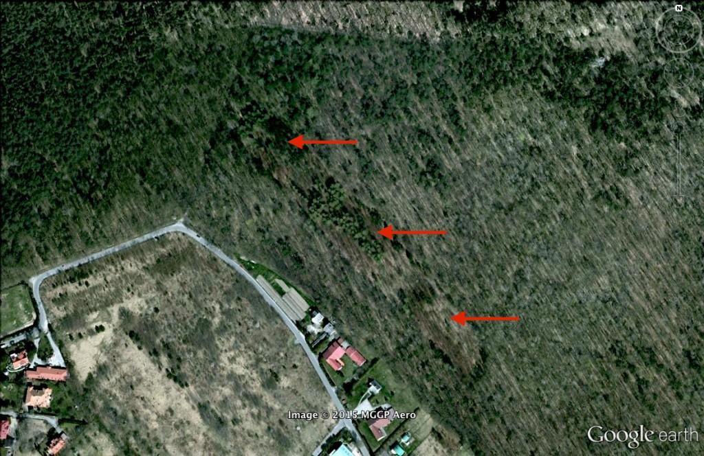 Katastrofa lotnicza w Lesie Kabackim - 10 Ciekawych Miejsc w Polsce - Źródło: Google Earth