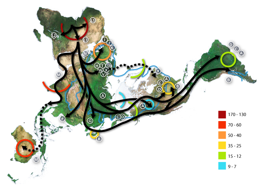 Mapa prehistorycznych wędrówek ludzkości w oparciu o teorię mitochondrialnej Ewy - Źródło: commons.wikimedia.org