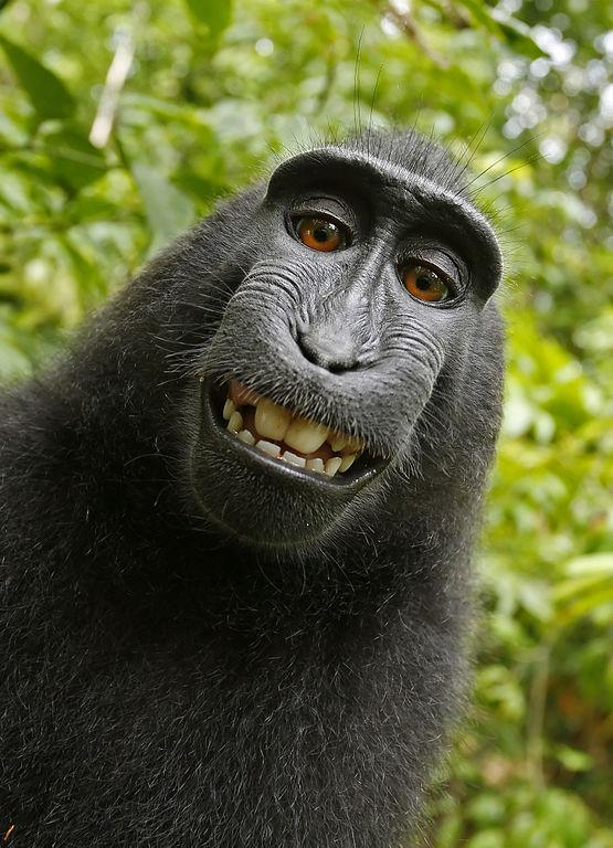 Sympatyczna małpa Naturo i jej własne zdjęcie