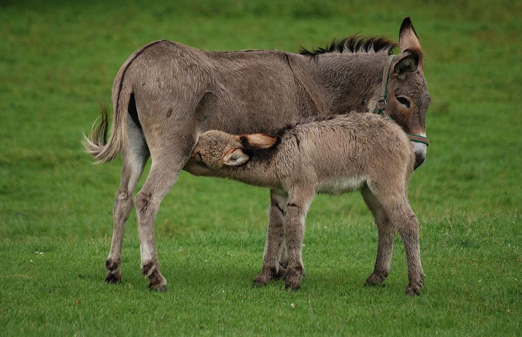 Park Dzikich Zwierząt w Kadzidłowie - Atrakcje Turystyczne Mazury - Źródło: commons.wikimedia.org Foto: Lilly M