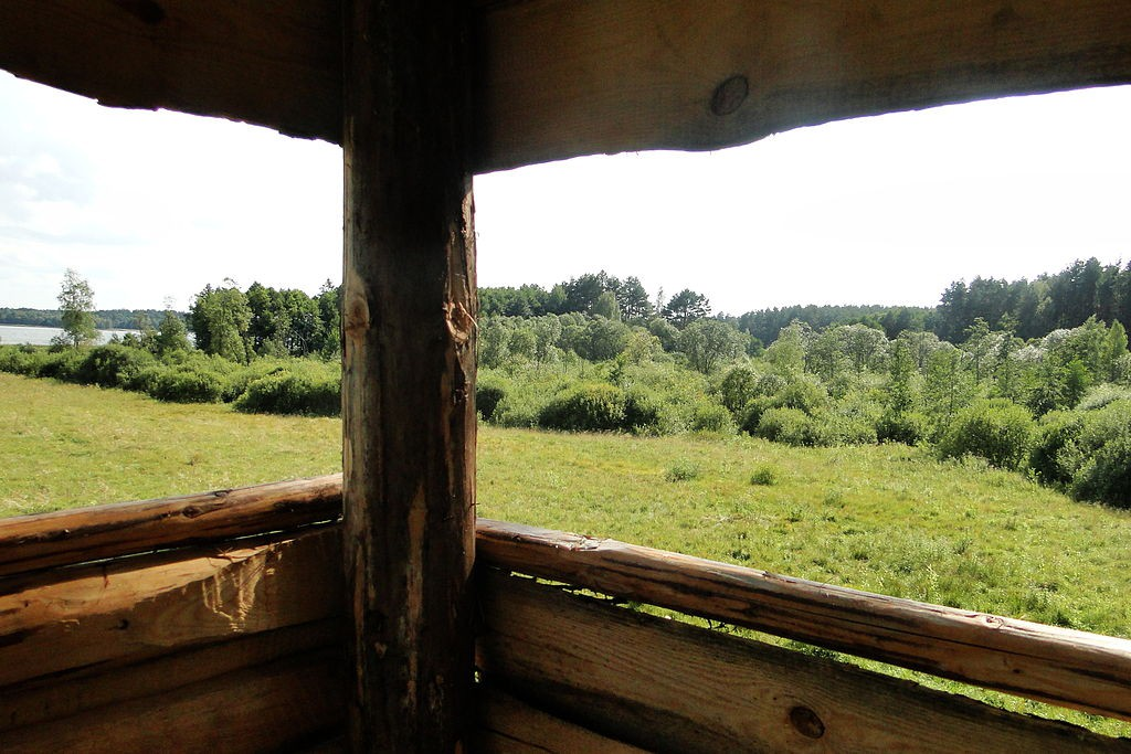 Puszcza Piska - Ciekawe Miejsca na Mazurach - Foto: Mateusz Giełczyński Źródło: commons.wikimedia.org