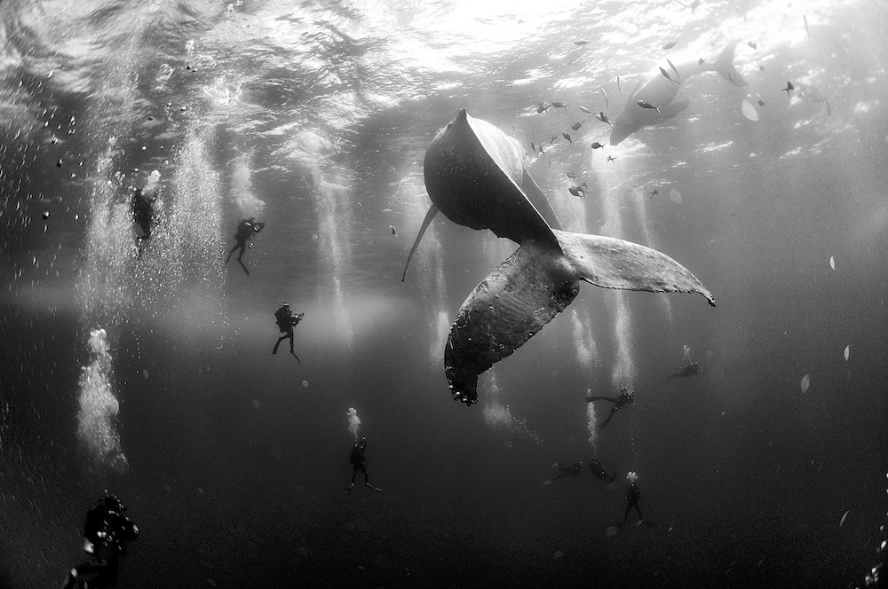 Foto: © Anuar Patjane Floriuk - Whale Whisperers - World Press Photo 2016