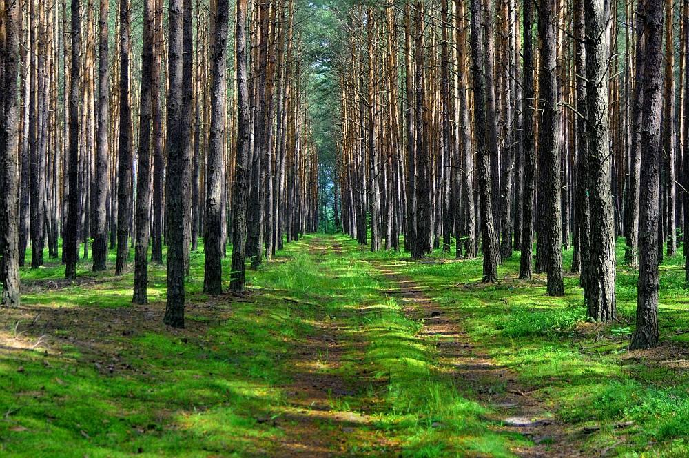 Uroczysko Belfont - 10 baśniowych i urokliwych miejsc w Polsce - Foto: Mirosław Teterycz