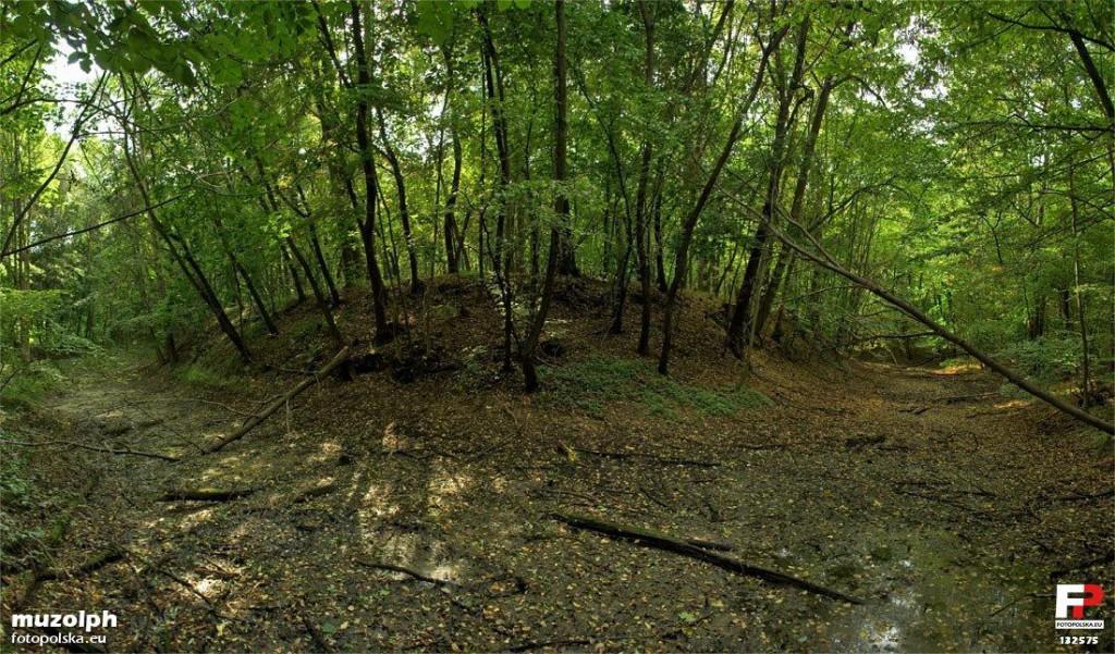 Grodzisko Maniów - Źródło: Fotopolska.eu CC-BY-SA 3.0 - Foto: muzolph