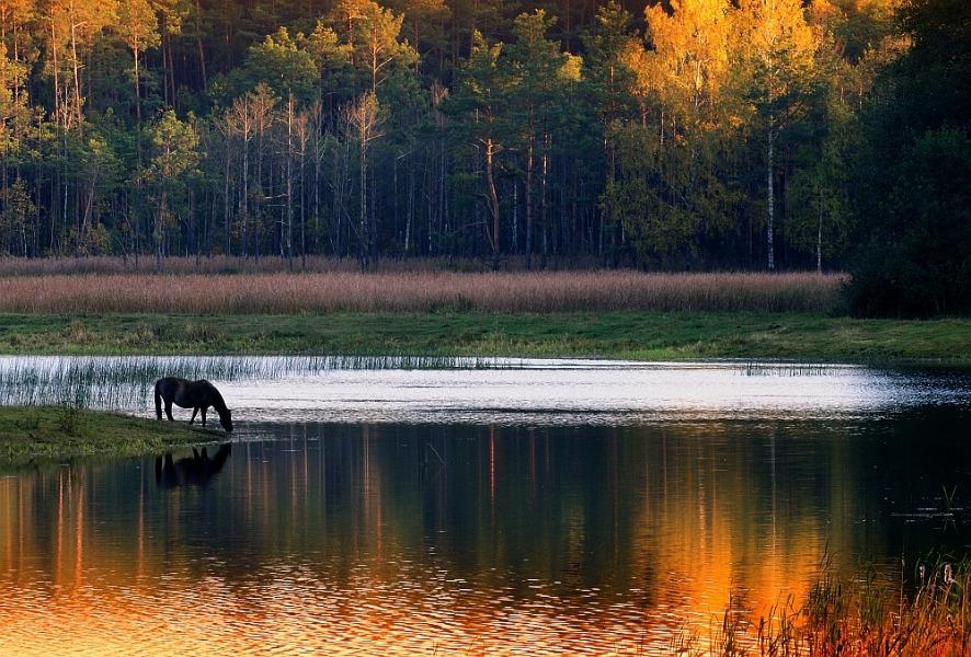 Stawy Echo - 10 baśniowych i urokliwych miejsc w Polsce - Foto: Mirosław Teterycz