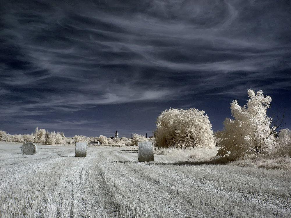 Pola na północ od Świebodzic - Foto: Kamil Pluta
