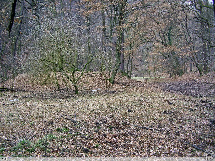 Pozostałości stawu i zachowany kształt wysepki - Foto: Adrian Sitko Źródło: dolny-slask.org.pl