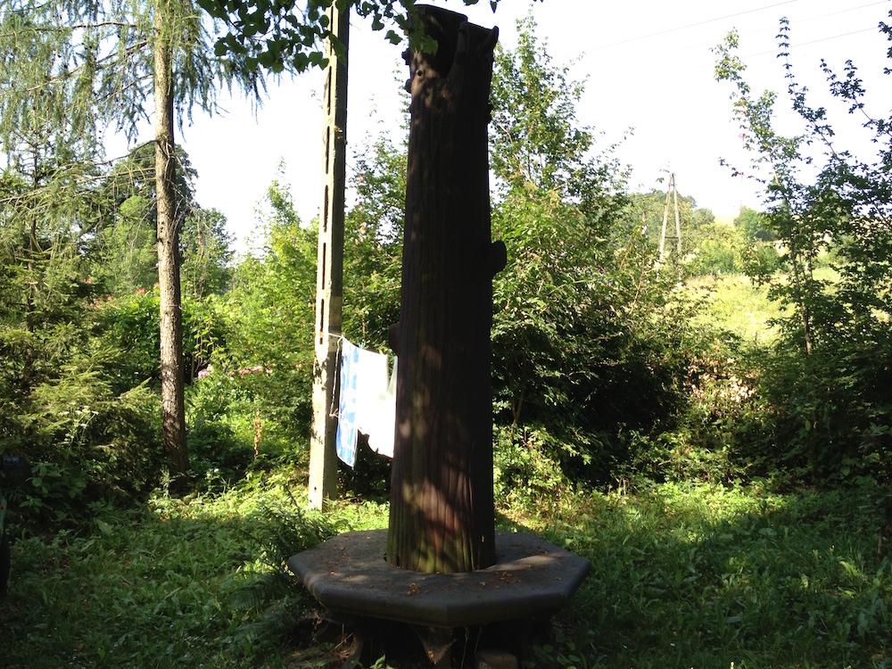 Żelazna Lipa Fryderyka - Dziś często suszy się na niej pranie - Zapomniane miejsca na Dolnym Śląsku