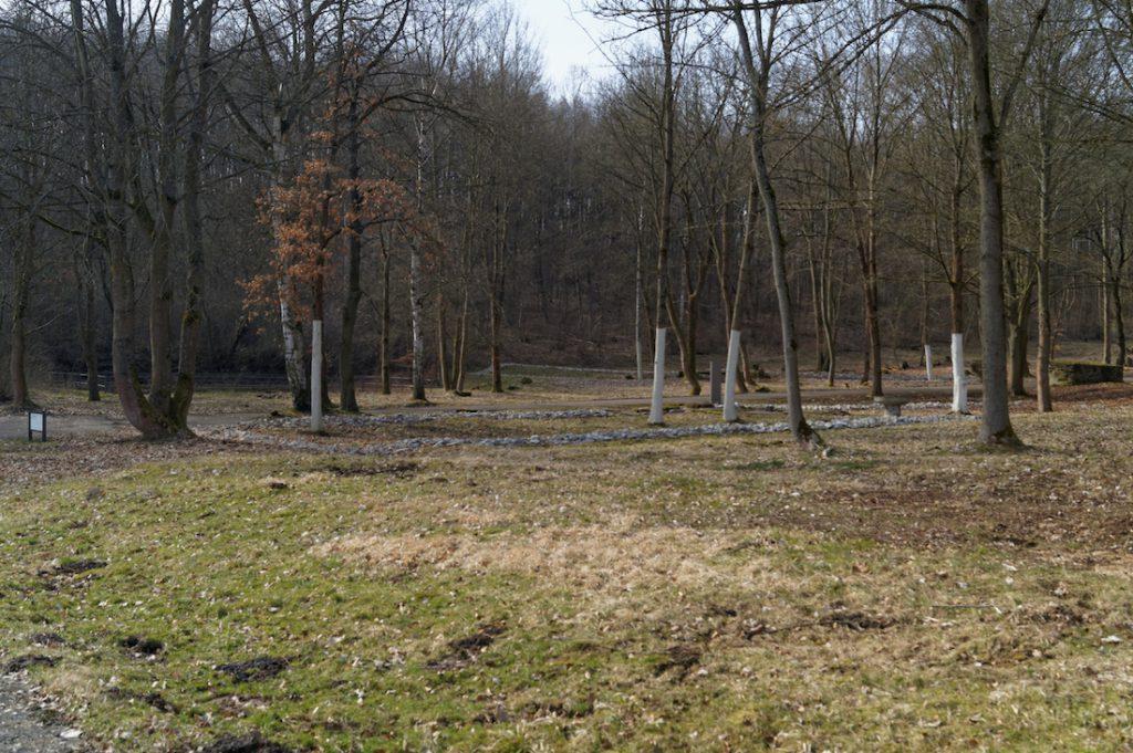 Dziś w miejscu dawnych baraków rośnie las, drzewa pomalowane na biało wskazują, gdzie kiedyś stały budynki