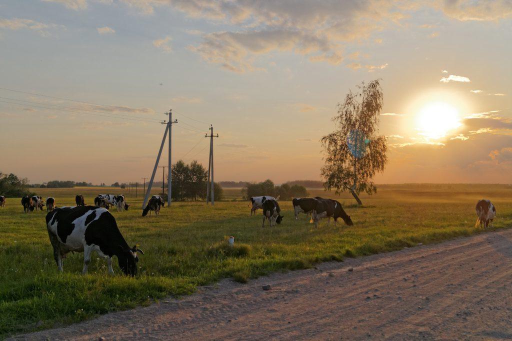 Pozostała część kraju jest w większości rolnicza, nieco zacofana