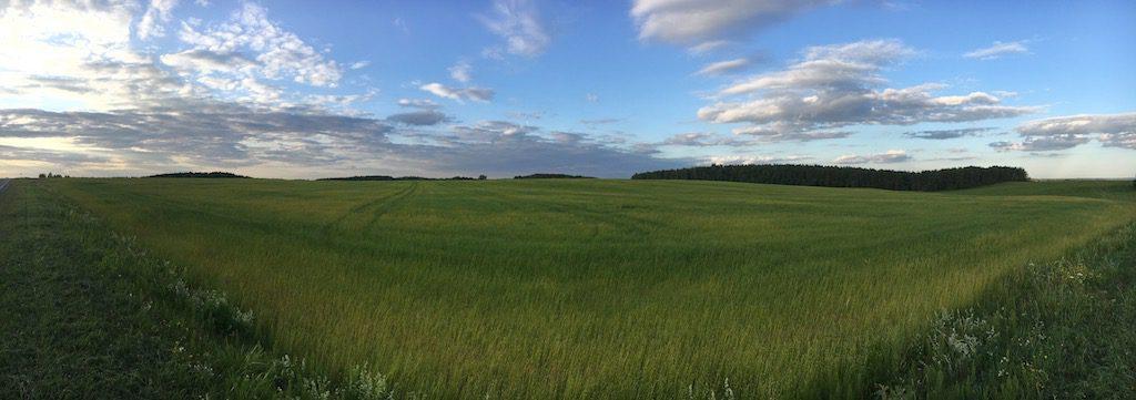 Krajobraz Białorusi zdominowany jest przez pola