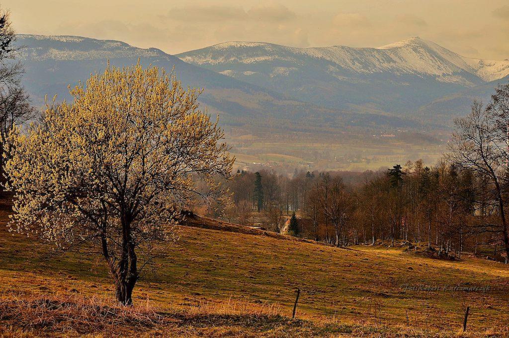 W tle Karkonosze i Śnieżka - Foto: Robert Karczmarczyk