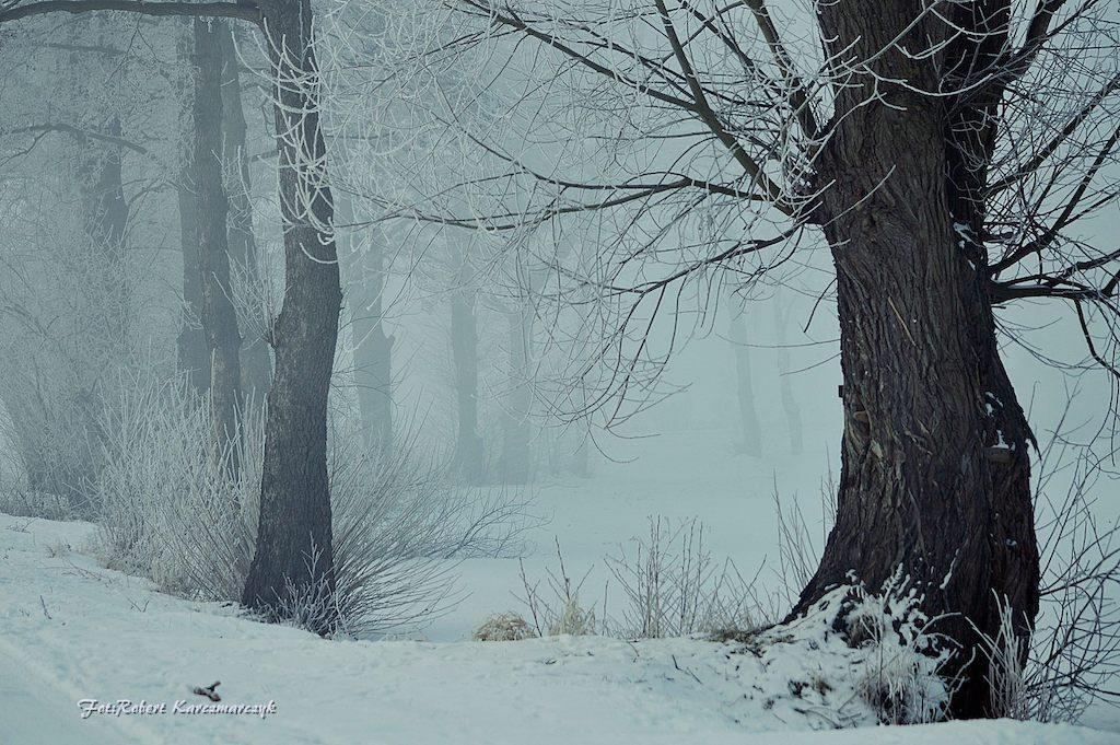 Zima - Foto: Robert Karczmarczyk