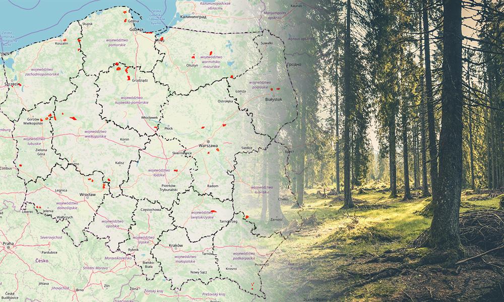 Mapa Miejsc W Lasach W Ktorych Mozna Legalnie Biwakowac Eloblog
