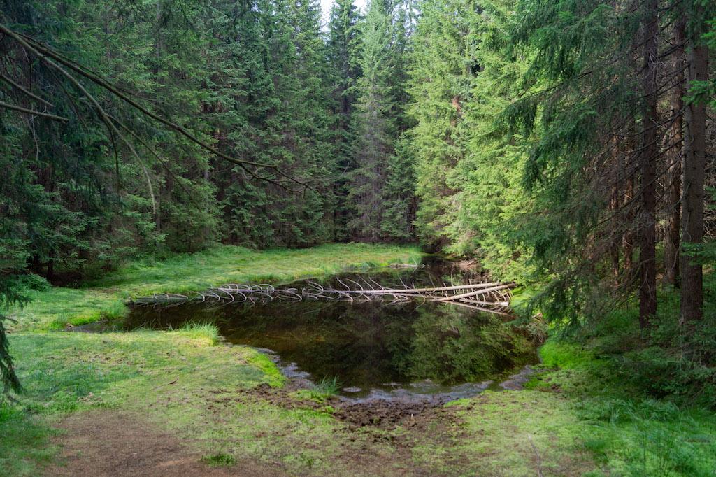 Mały stawik, tyle pozostało po niegdyś sporym zbiorniku wody